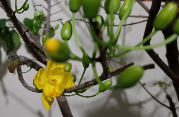 Xuân tịnh