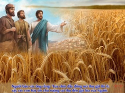 Daily Meditation: ``Ask the Lord of the harvest to send workers to his harvest``