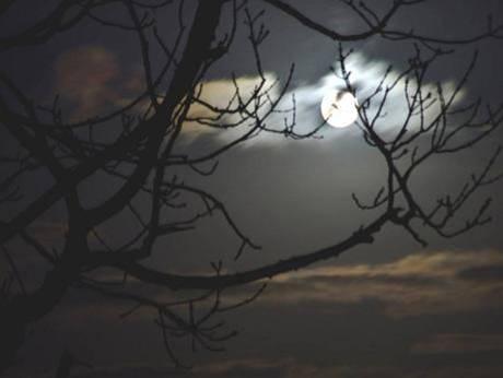 Hàn Mặc Tử - Hành trình tìm tình yêu (2)