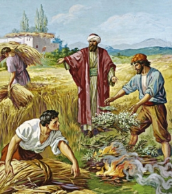 Liturgical day: Tuesday 17th in Ordinary Time