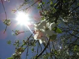 Dưới nắng xuân miên trường