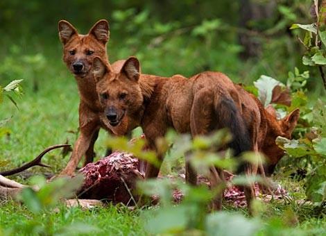 Con sói rừng (Giải Viết Văn Đường Trường 2016)
