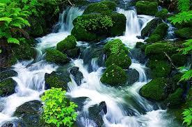 Suối nguồn ngày no thỏa