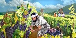 Vinh dự và trách nhiệm với vườn nho của Thiên Chúa - Suy niệm TMCN XXVII TN A